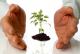 ¿Es necesario incluir los seguros de vida al hacer testamento?