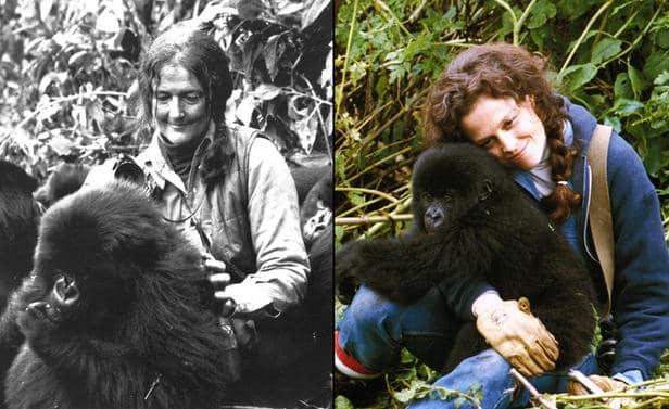 Hacer testamento entre la niebla dian fossey testamenta for Gorilas en la niebla