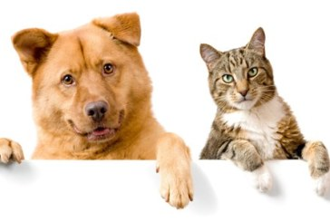 Hacer testamento tomando en cuenta a mis mascotas