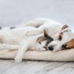 Dejar la herencia a tus animales: ¿es posible?