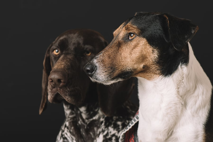 Testamenta - Dejar la herencia a tus animales - es posibleIII