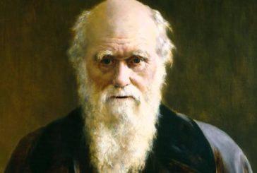 ¿Cómo llegó a la teoría de la evolución Darwin?